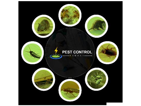 Pest Control Kambah